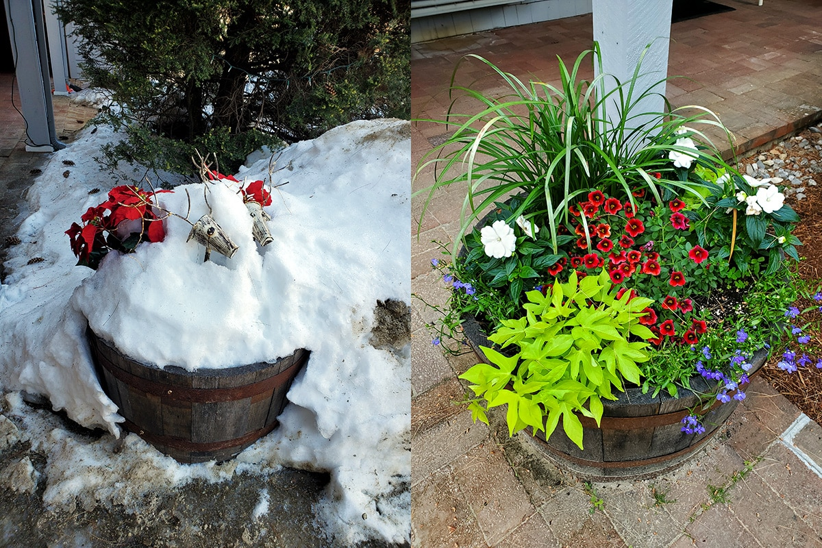 Image on the left shows a barrel with fake poinsettias covered in snow, while the image on the right shows the same barrel in the spring with blooming flowers