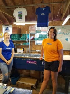 Two employees standing on either side of a sorting table full of blueberries