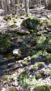 Brook in the Shieling State Forest
