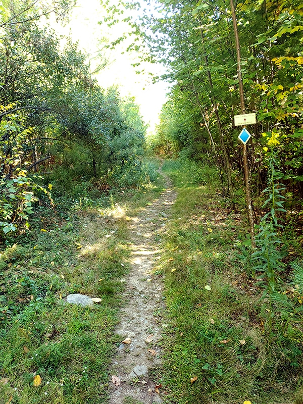 A trail opening up with brush on either side as it continues forward