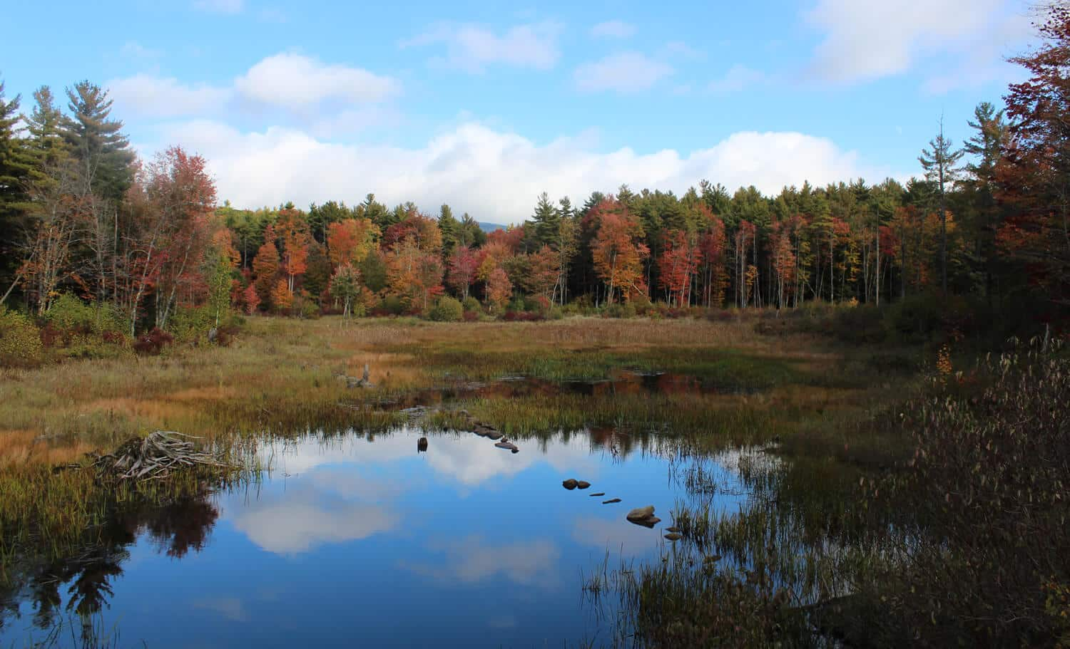 Blue sky and fluffy white clouds are reflected in a meadow pond surrounded by fall foliage