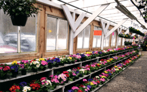rows of multiple colored flowers inside greenhouse
