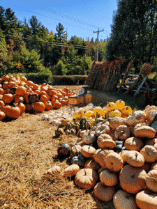 piles of orange and white pumpkins
