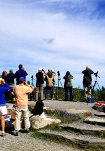 Several people using binoculars and periscopes to watch for hawks.